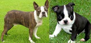 Restricted Dog Breeds List Boston